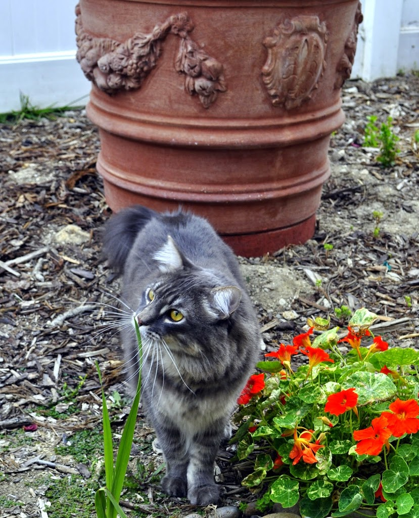 Tom Sawyer exploring his garden